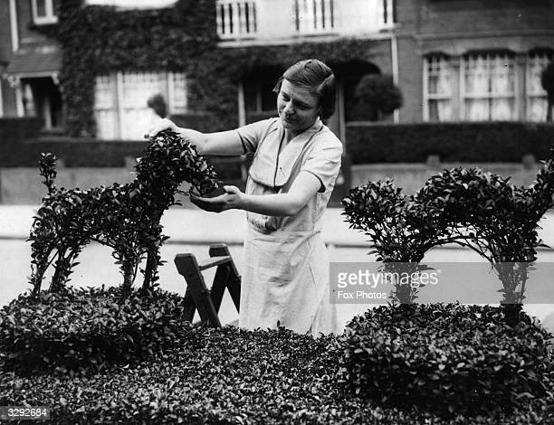 A woman trimming her privet hedge which she has cut into the shape of a dog and cat in fighting pose