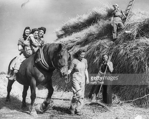 Three trainee land girls take a ride on a cart horse's back while others carry on working on a hay stack during harvest time in west Suffolk during...