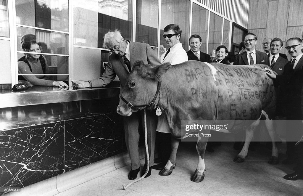 Sir Alan Herbert, author and barrister-at-law, celebrates 60 years of writing for satirical magazine 'Punch', by cashing in a cow at Barclays Bank, based on one of his 'misleading cases in common law' when someone wrote a cheque for the tax inspector on a cow.