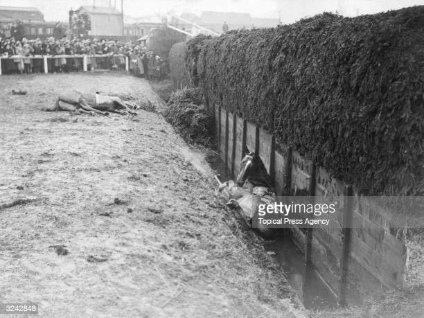 Wavertree and Awbeg pictured after falling during the 1922 Grand National at Aintree Liverpool
