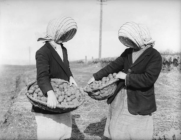 UNS: In The News: National Potato Day