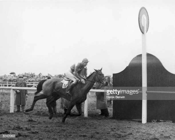Pat Taaffe rides Mrs W Welman's Quare Times to victory at the 1955 Grand National.