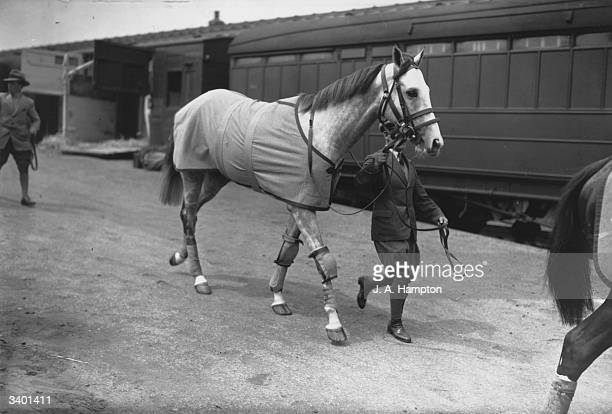 The Aga Khan's horse 'Mahmoud' arriving at Epsom by rail for the Derby. He is trained by Frank Butters.