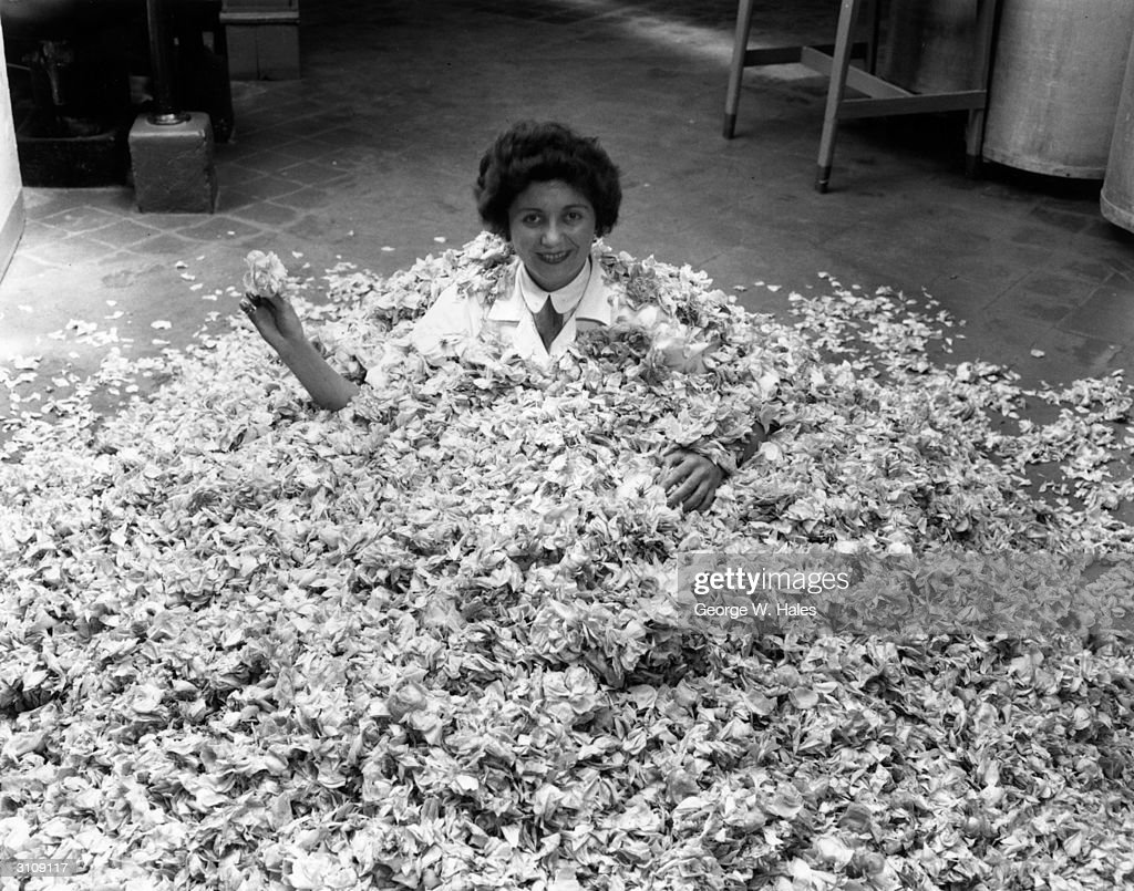Bed Of Roses : News Photo