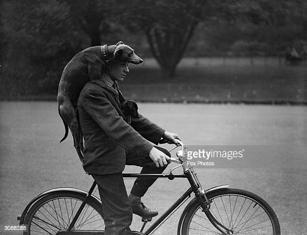 A man cycling through London's Battersea with a greyhound draped over his shoulders and a puppy tucked inside his jacket