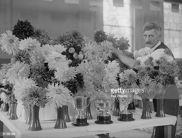 Dockworker Mr E H Francis with some of his dahlia exhibits at the Port of London Authority Dockland Flower Show He has won six trophies for two years...