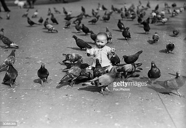 A child's toy doll amongst a flock of pigeons at Trafalgar Square London