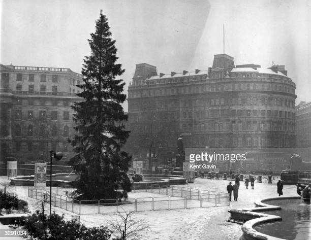 The Christmas tree given by the Norwegian people in Trafalgar Square London covered by the first snow of winter