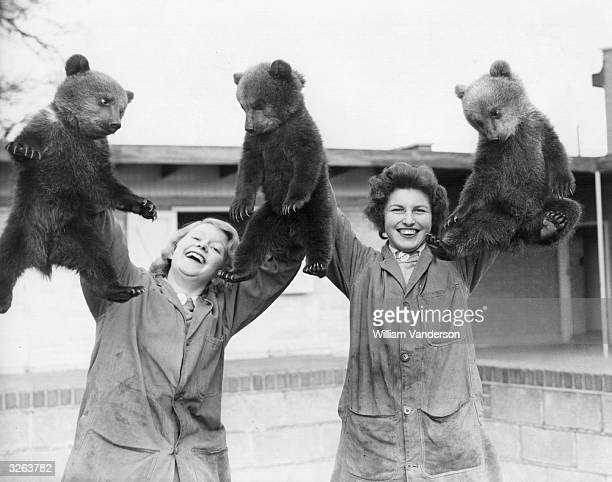 Whipsnade Zoo's triplet brown bear cubs being held aloft by their keepers on the occasion of their public debut