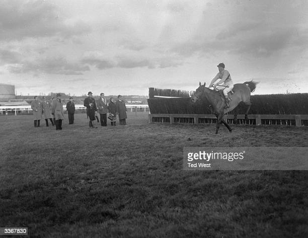 The Irish champion steeplechaser 'Arkle' ridden by Peter Taafe jumps the final fence before winning the Hennessey Gold Cup handicap at Newbury