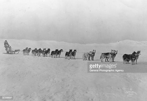 Leionhard Seppala and his Siberian racers the Inuit sled dogs of the North West in the first photograph of Amundsen's departure for the North Pole