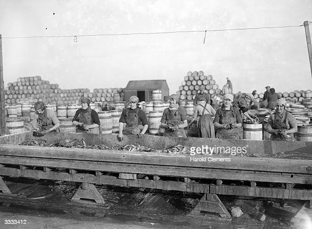 Scottish fisherwomen at work on the largest haul of herrings of the season at Great Yarmouth in England Thousands of women travel from Scotland to...