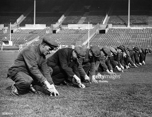 Wembley Stadium groundstaff working on the pitch for the FA Cup Final where dock weeds dandelions and daisies are handweeded from the arena