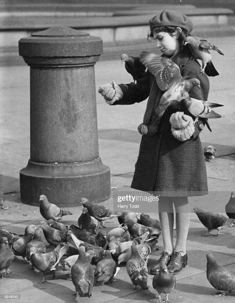 Pigeon Feeder : News Photo