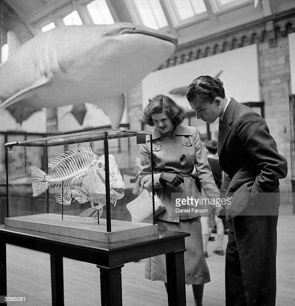 Visitors to the Natural History Museum London examine the skeleton of a large fish in a glass case while a model of a whale shark hangs overhead...