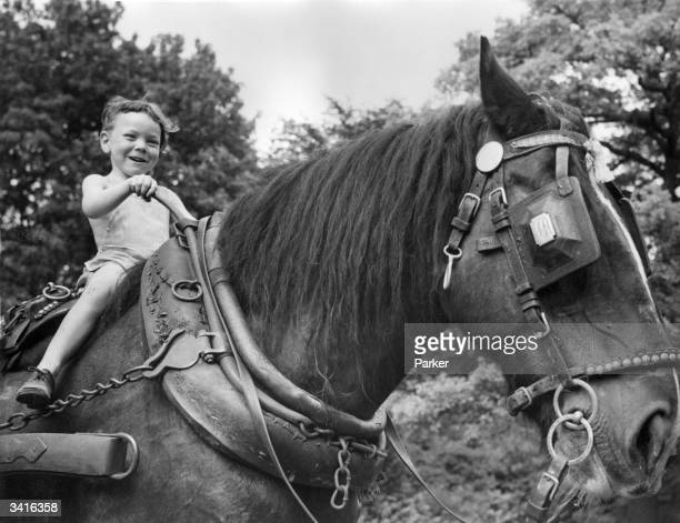 A young evacuee from Croydon views country life in Buckinghamshire from the back of a shire horse