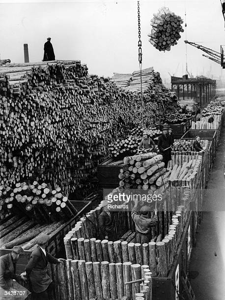Large pile of logs from Canada being loaded onto trucks at Cardiff dock to be sent to various collieries as pit props.