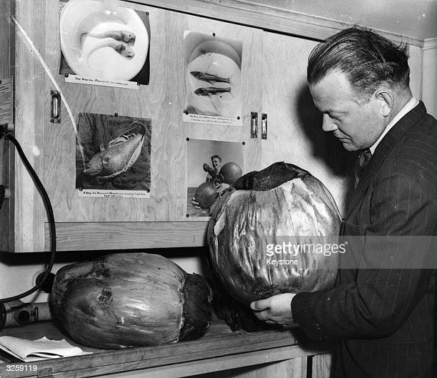 Dr A W Hullenberg with the largest fruit in the world the coco de mer which grows in the trees in the Seychelles Islands picked up by the Swedish...