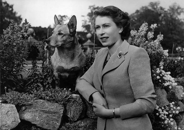 UNS: In The News: Queen Elizabeth II And Her Corgis