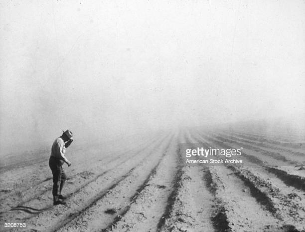Secretary of agriculture Ezra Taft Benson shields his face with his hat as he walks along a row of planted crops during a heavy drought season in...