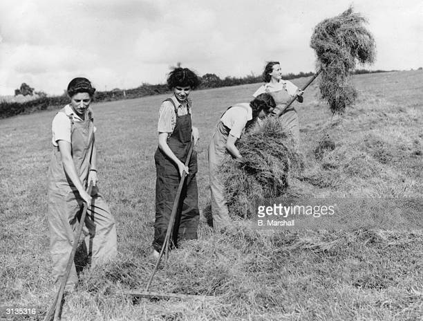 Members of the Women's Land Army gather the late harvest on a farm in Llangwm Wales They have just completed a course in tractor driving a far cry...