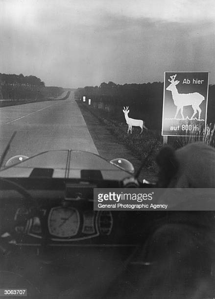 A roebuck caught by the headlights on an autobahn stands beside a luminous sign warning motorists of the presence of deer Original Publication...