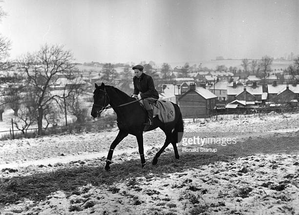 British jockey Lester Piggott, aged 16, exercising one of his father's horses in the snow on the Berkshire Downs near their stables at Lambourn....