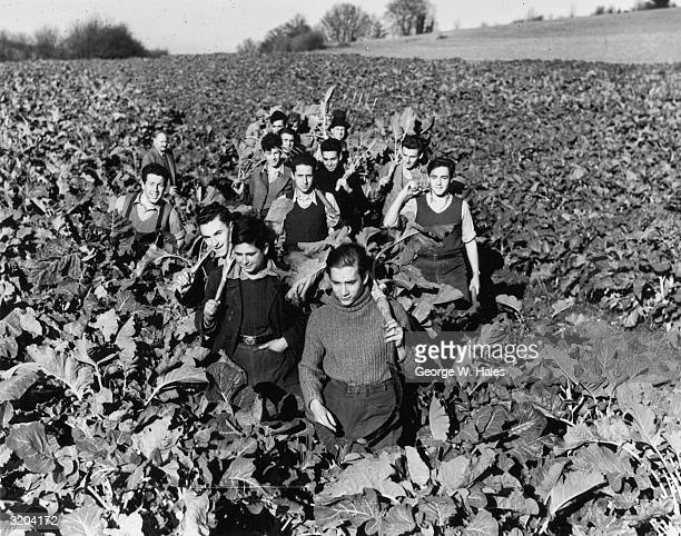 German refugee boys returning from the fields at Flint Hall Farm Hambledon The boys are part of a scheme to train boys to become farmers and then...