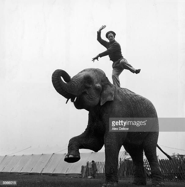 British actor Jon Pertwee balancing on an elephant at Billy Smart's Circus Original Publication Picture Post 8126 Pertwee Harnessed pub 1955