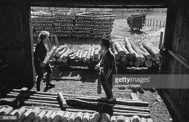 Logs for pit props in mines being stored in a timber yard. Original Publication: Picture Post - 2001 - Re-Building Programme For Britain's Trees -...