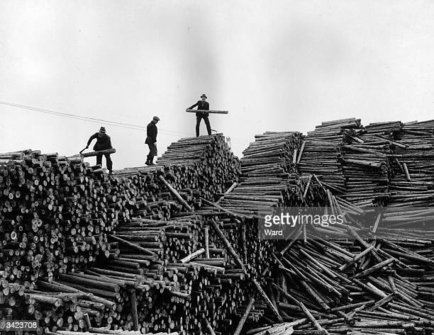 Large pile of logs from Russia at Cardiff dock before being sent to various collieries as pit props.