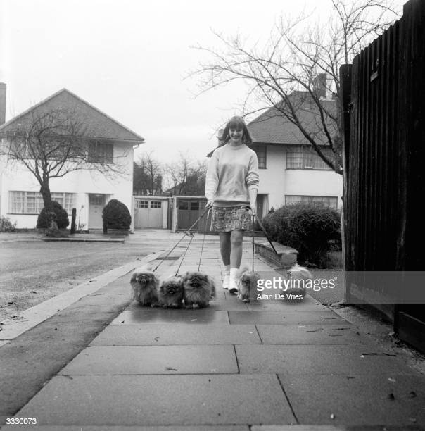 Sixteenyearold Sonja Forquet of Watford taking her five Pekinese dogs for a walk