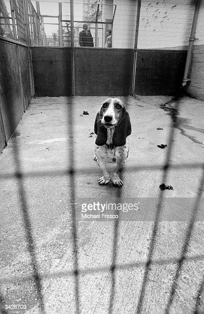 A stray dog in an enclosure at Battersea Dogs Home south London an image used in a preChristmas appeal to find owners for hundreds of strays