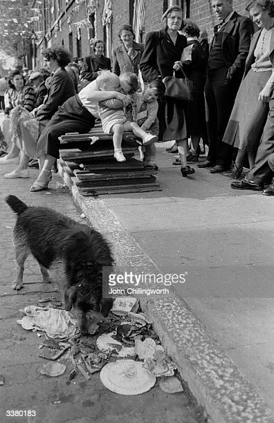 A dog begins to dispose of the litter left after a party in Morpeth Street in London's East End to celebrate the coronation of Queen Elizabeth II...