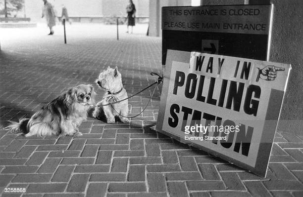 Two dogs Tashy and Lucky 'parked' outside the Kensington polling station whilst their owner exercises his or her constitutional right