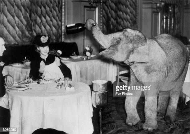 Comet an elephant from Chessington Zoo spends the weekend as a waiter at the Trocadero Restaurant in Piccadilly Circus London