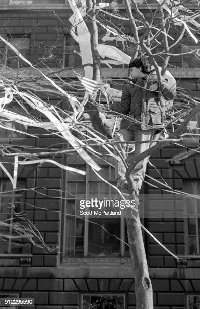 New York A young boy with an American flag in hand climbs up a tree to get a better view of a ticker tape parade along Broadway's Canyon of Heroes...