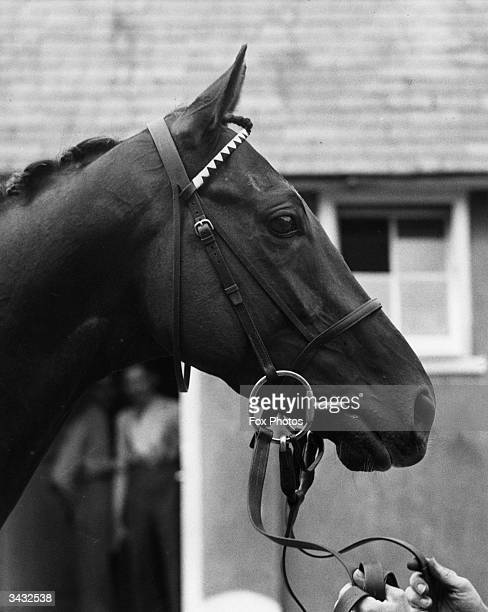 The Derby winner, Hyperion, at stables in Epsom.