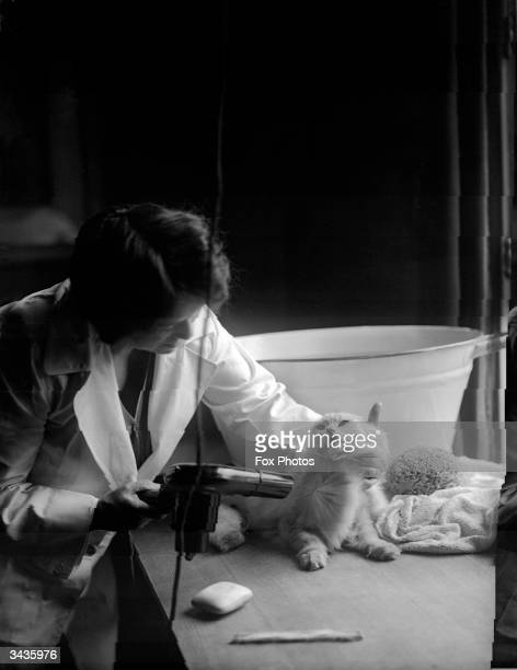 Mrs Yeates of 15 Pembroke Gardens West London dries one of her Persian cats using a hairdryer