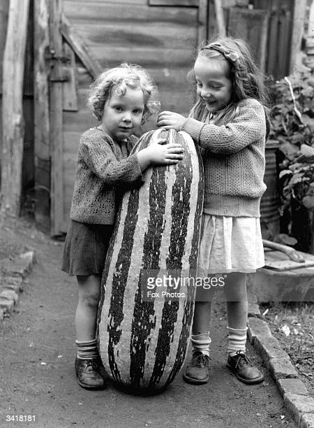 Pair of young girls are nearly dwarfed by an outsized marrow, grown on a Guildford allotment.