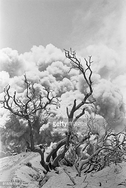 3/29/63San Jose Costa Rica Barren branches twist artistically against the backdrop of devastating billows of smoke It was the setting of the March...