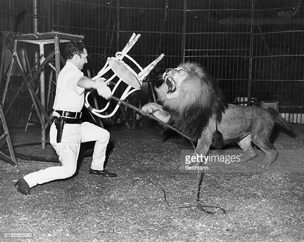 Animal trainer Clyde Beatty in a cage with Prince the killer lion BPA2