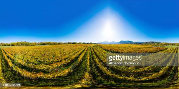 360-degree sperical panoramic view of yellow vineyards in alsace - 360 fotografías e imágenes de stock