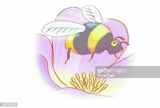 39p x 26p Tim Ladwig color illustration of bee hovering above flower pollen
