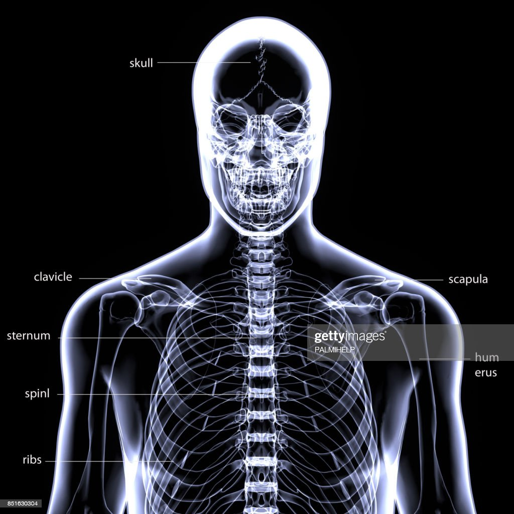 3d Illustration Of Human Body Skeleton Anatomy Stock Photo | Getty ...