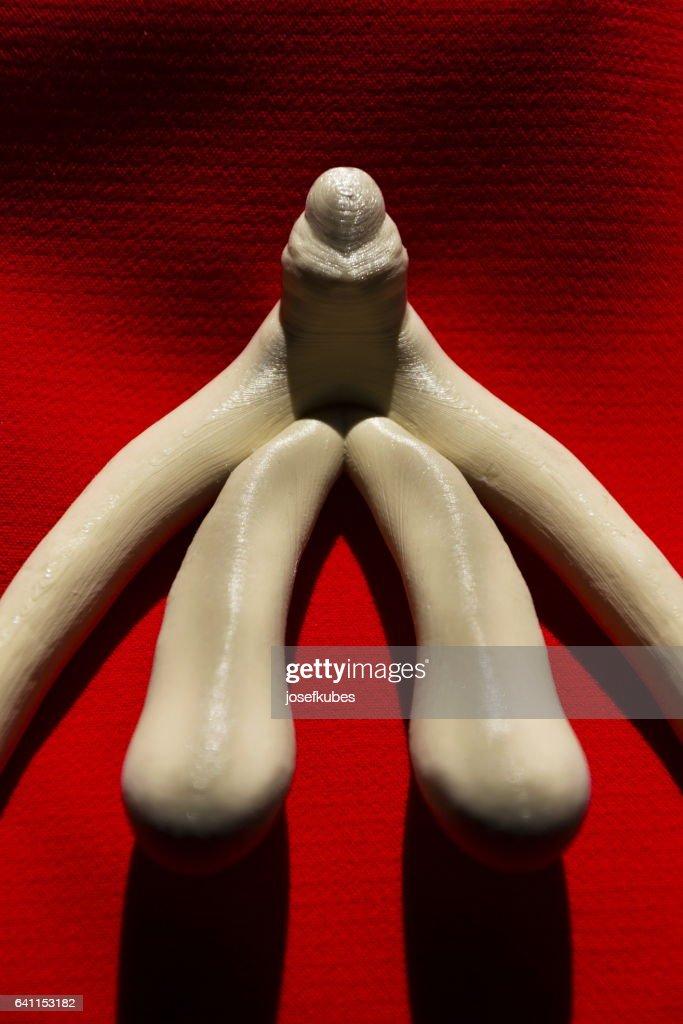 3d Gedruckte Weiblichen Geschlechts Organ Klitoris Für Menschliche ...