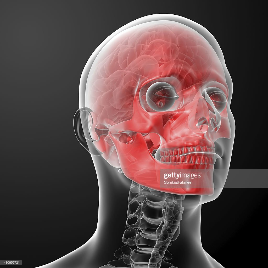 3d Render Human Skull Anatomy Stock Photo   Getty Images