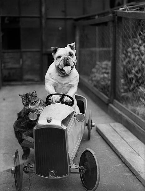 Dog And Cat Car Wall Art