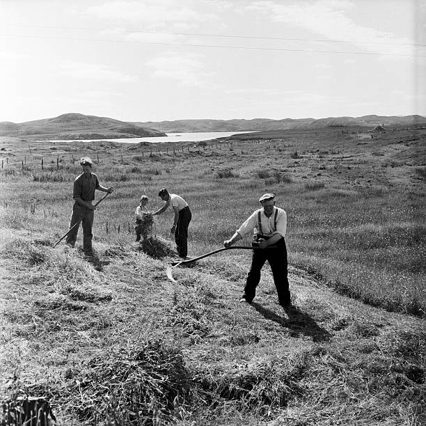 Scottish Harvest