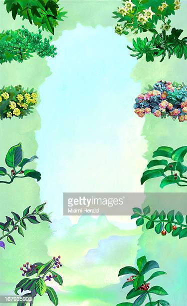 40p x 66p Earl F Lam III color illustration of an open sky bordered by a variety of flowering and budding branches